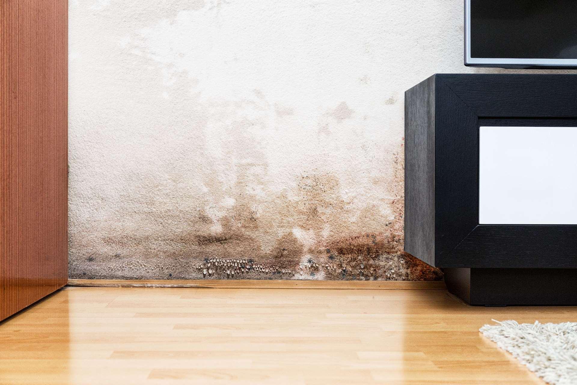 kellersanierung kellerwand sanieren von innen und au en. Black Bedroom Furniture Sets. Home Design Ideas