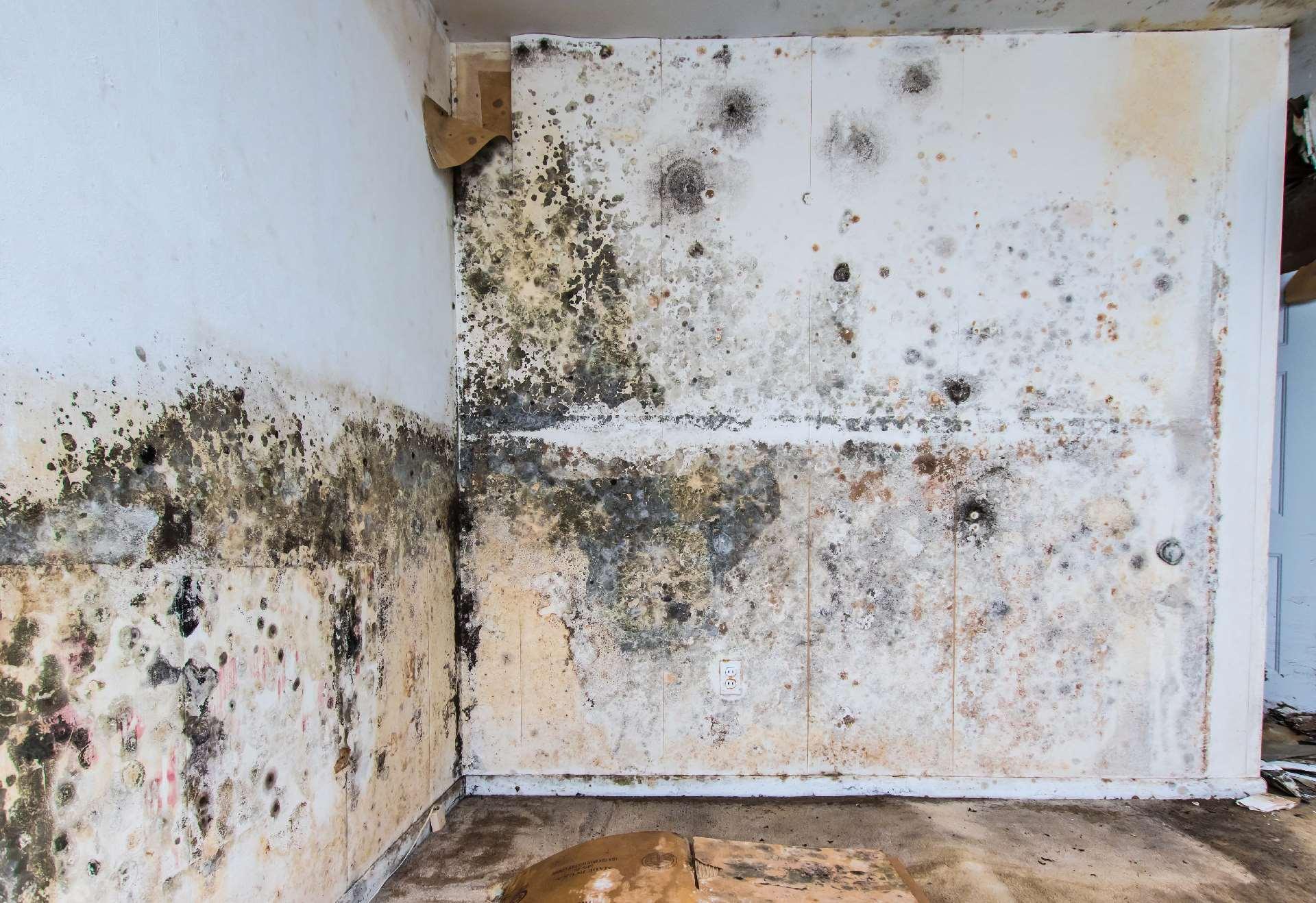 Bevorzugt Kellersanierung | Kellerwand sanieren von Innen und Außen HO98